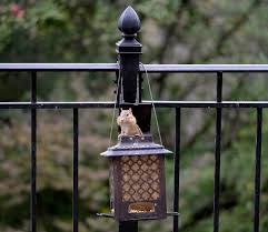 Page 54 Of Bird Feeder Pictures Curated Photography On Eyeem
