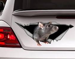 Rat Car Decal Etsy