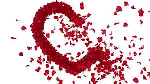 ورود متناثرة على شكل قلب حب 3 Youtube