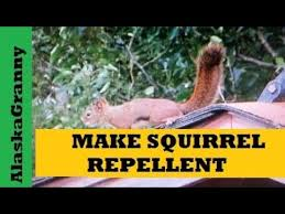 make squirrel repellent for gardens