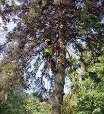 About Us | Tree Service and Removal in Cleveland | Bending Branches