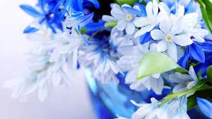 beautiful flowers wallpaper hd