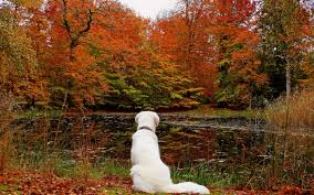 Image result for dogs in autumn photos