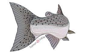 Salmon Decal Salmon Sable