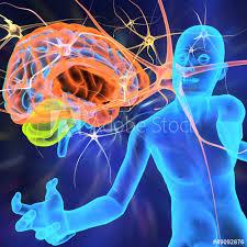 Cuerpo humano con cerebro y células nerviosas - Buy this stock ...