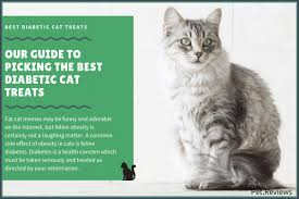 7 best diabetic cat treats with our