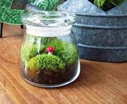 glass plant terrariums