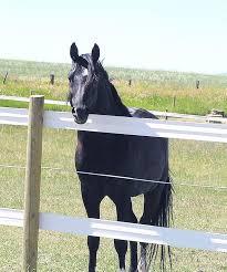 File Horse In Vinyl Fence Jpg Wikimedia Commons