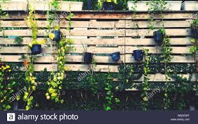 Potted Plants Hanging On Wooden Fence Stock Photo Alamy
