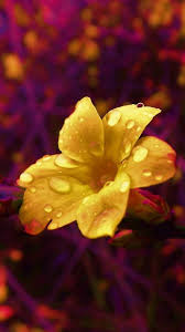 Image result for flowers in rain