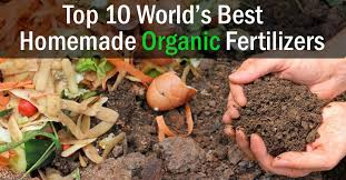 best homemade organic fertilizers