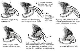 how do i trim my dog s nails petsch