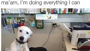 15 Funny Dog Memes That Will Brigthen Your Day