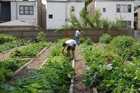 8 whole cool ideas vegetable garden