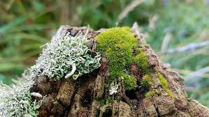 Hd Wallpaper Gray Tree Trunk Covered By Green Moss Weave Fence Post Wood Wallpaper Flare