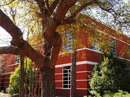 wallpaper trees window architecture