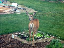 Homemade Invisible Deer Fencing Or Liquid Fence Keeps The Pest Out