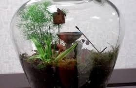make a terrarium tiny gardens for