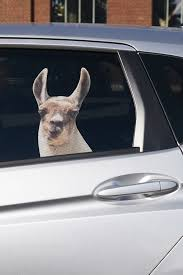 Llama Car Decal Car Decals Car Decals