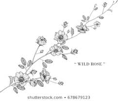 flower drawing images stock photos