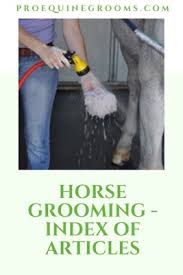 pro equine grooms horse grooming