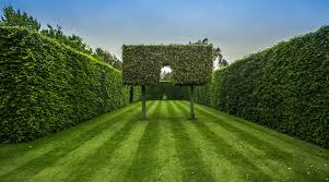 63 Of The Best Landscape Hedge Ideas 39 Is Awesome