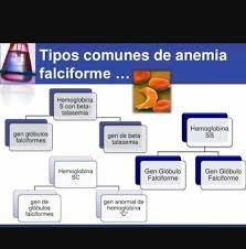 Dúvidas Sobre Anemia Falciforme - Fotos    Facebook