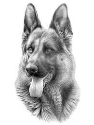German Shepherd Tekenen Hond Tekeningen Dieren Tekenen En