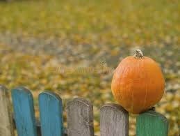 1 833 Fence Pumpkin Photos Free Royalty Free Stock Photos From Dreamstime