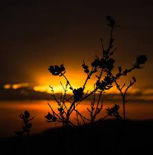Gambar : pemandangan, alam, horison, cabang, bayangan hitam, awan ...