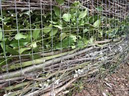 Composting Fences Sn Ppdragons Garden