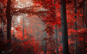 free red forest wallpaper 1920x1200