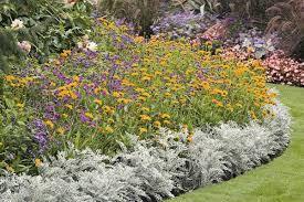 beautiful deer resistant plants the