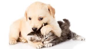 kitten and puppy wallpaper 1920x1080
