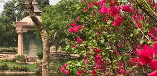buddha garden the delhi walla