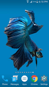 3d live wallpaper betta fish 3d