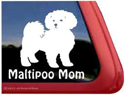 Amazon Com Maltipoo Mom Maltipoo Dog Window Decal Sticker Automotive
