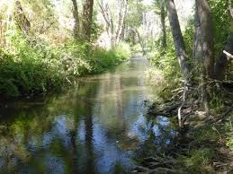The Little Shasta River: A model for sustaining our national heritage |  California WaterBlog