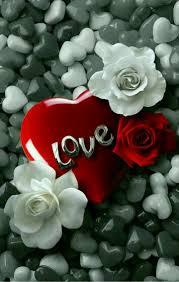 خلفيات رومنسيه خلفيات غرامية ورومانسية تجنن صباح الورد