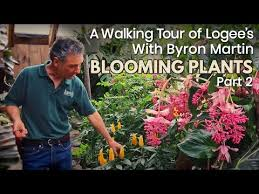 A Walking Tour of Logee's Greenhouses with Byron Martin - Blooming ...
