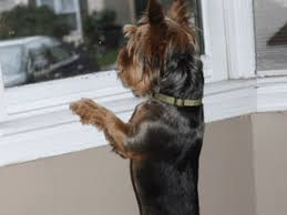 Why Do Dogs Bark At Nothing Pethelpful By Fellow Animal Lovers And Experts
