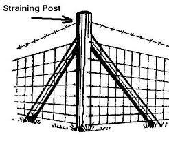 2 28m Long Straining And Corner Posts Jacksons Fencing
