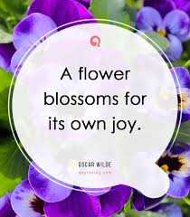 beautiful flower quotes pictures quotesing