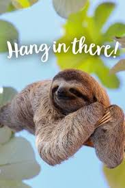 Hang in There: Funny Sloth Journal Notebook Gift by Sarah Crossley