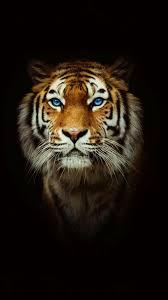 خلفيات حيوانات جميلة البوم صور حيوانات تحفة الغدر والخيانة
