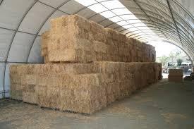 feeding grain hays to your horse