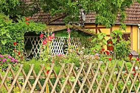 cottage garden plants for the shade