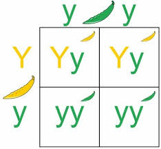 punnett square definition types and