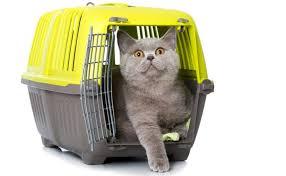 Resultado de imagen de transportin gato