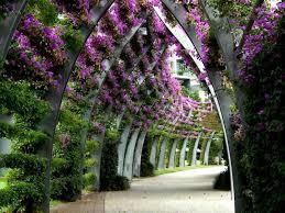 garden hd wallpaper flower nature